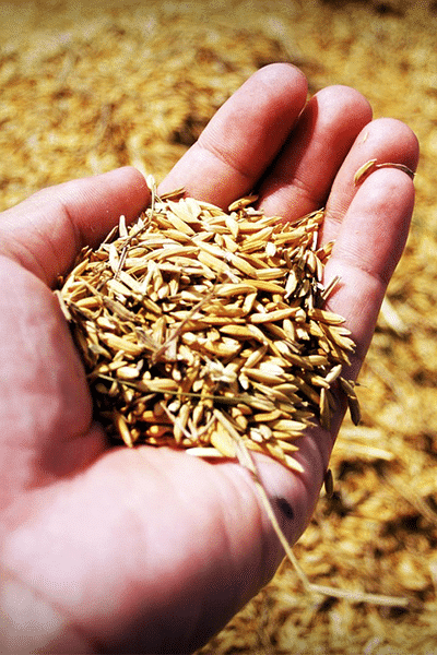 Recolte grain